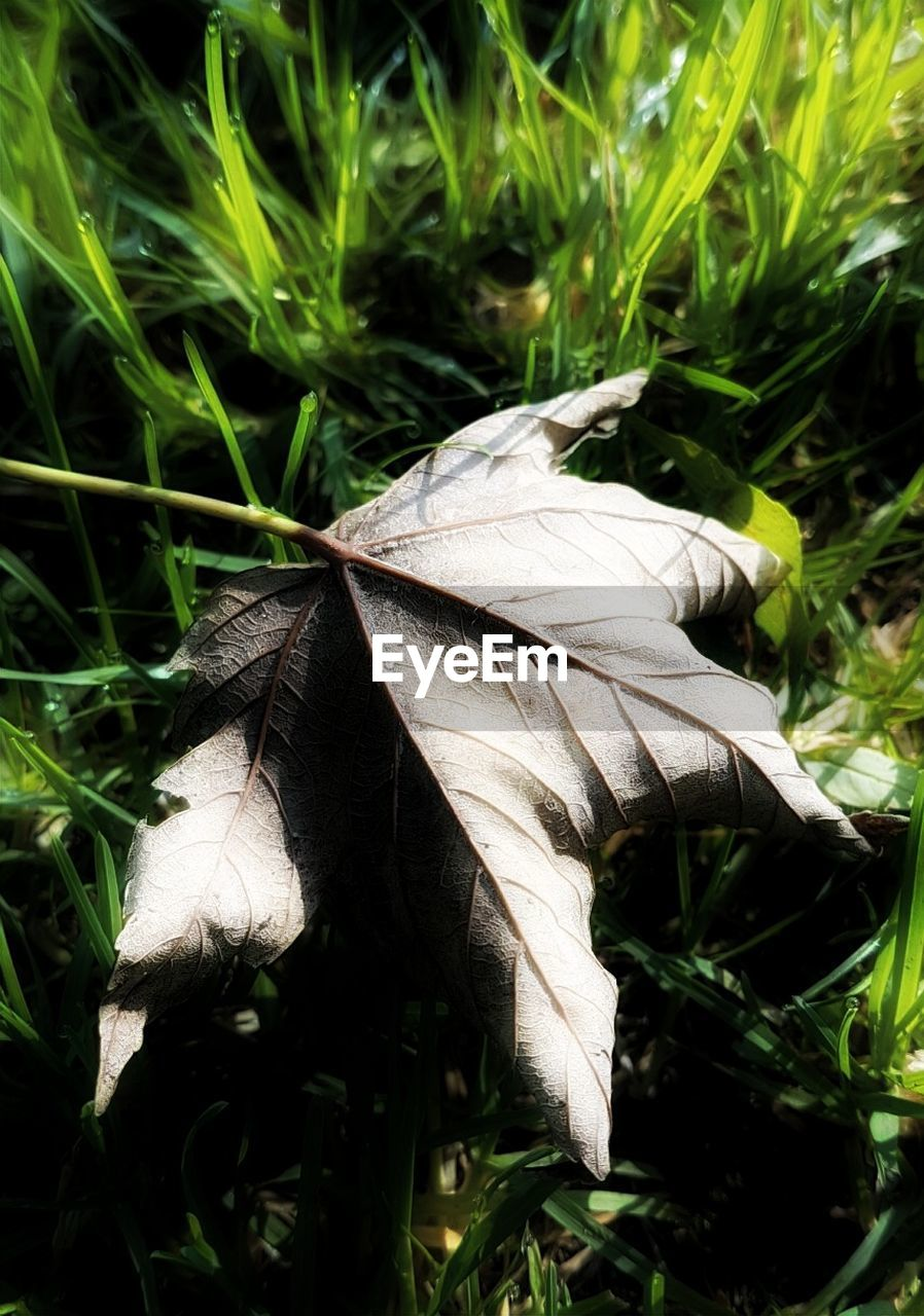 growth, close-up, nature, fragility, plant, no people, day, outdoors, grass, beauty in nature, freshness, flower head
