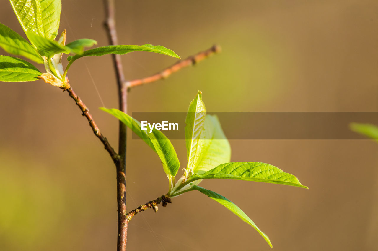 plant part, leaf, plant, growth, close-up, green color, nature, focus on foreground, beauty in nature, no people, selective focus, outdoors, day, tranquility, plant stem, sunlight, vulnerability, fragility, beginnings, freshness, leaves, plantation