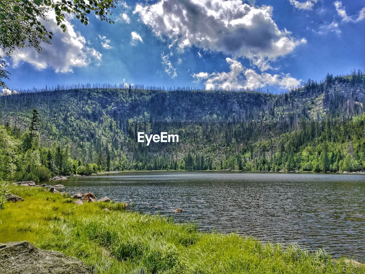 nature, tree, beauty in nature, scenics, sky, tranquility, tranquil scene, mountain, lake, cloud - sky, grass, no people, landscape, day, water, outdoors, growth, forest, mountain range, green color, plant, scenery, range