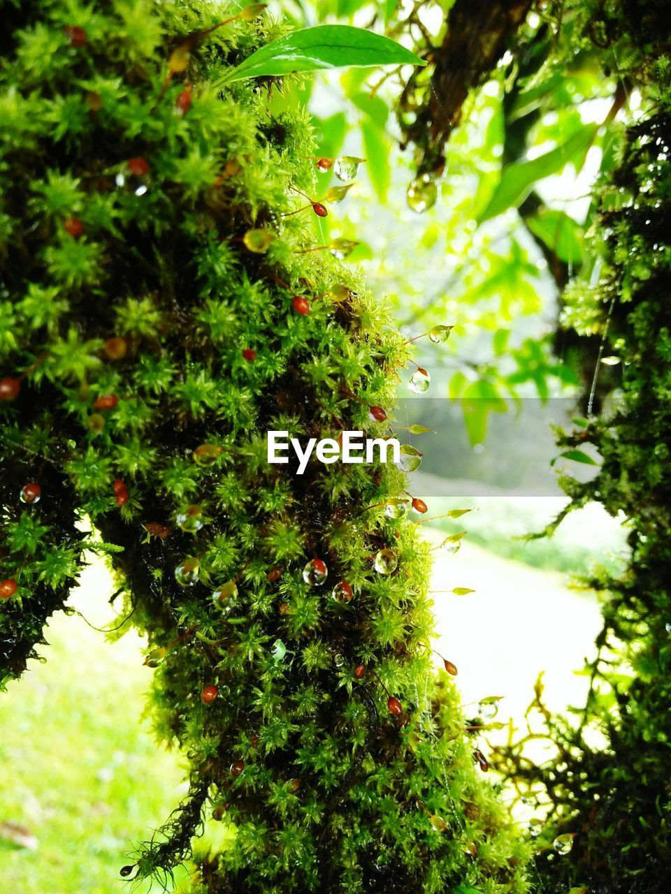 growth, green color, tree, nature, beauty in nature, no people, outdoors, day, plant, low angle view, fruit, branch, close-up, freshness