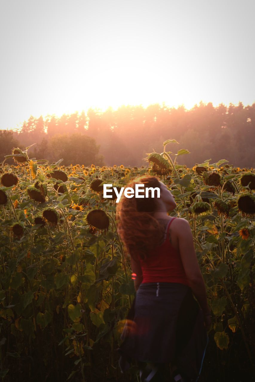 Rear view of woman standing amidst sunflowers during sunset