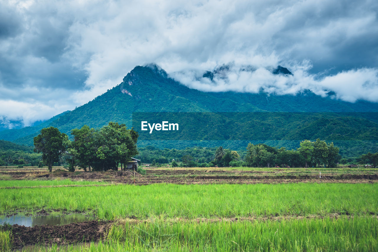 landscape, cloud - sky, sky, scenics - nature, plant, mountain, environment, field, rural scene, land, agriculture, tranquility, tranquil scene, beauty in nature, green color, growth, tree, farm, nature, mountain range, no people, outdoors, plantation
