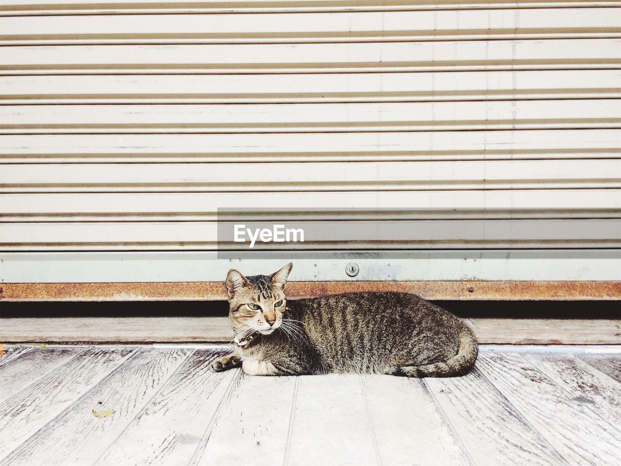 Cat Sitting Against Shutter