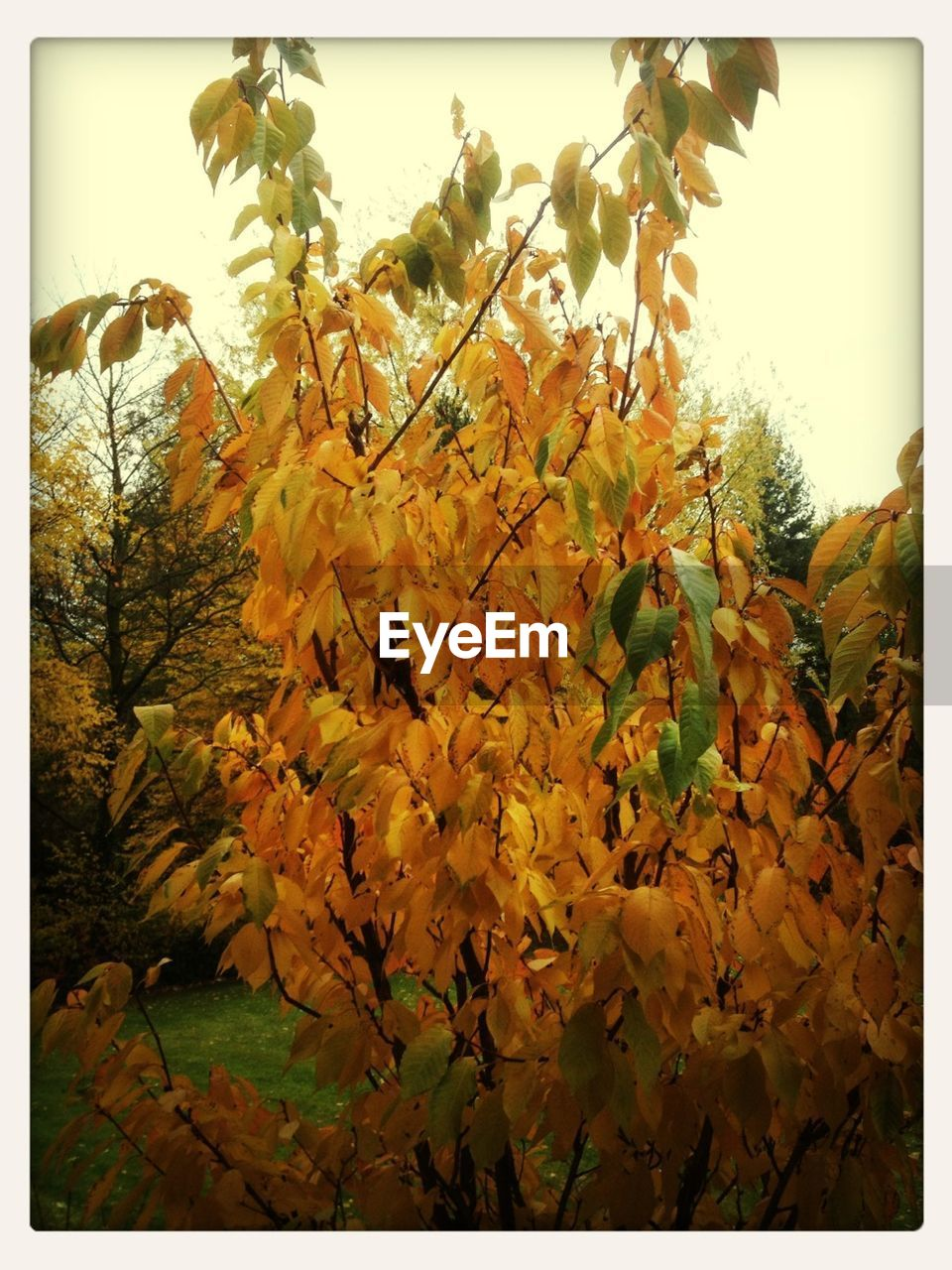 growth, nature, leaf, tree, autumn, beauty in nature, no people, outdoors, plant, tranquility, day, flower, branch, close-up, fragility, freshness, sky