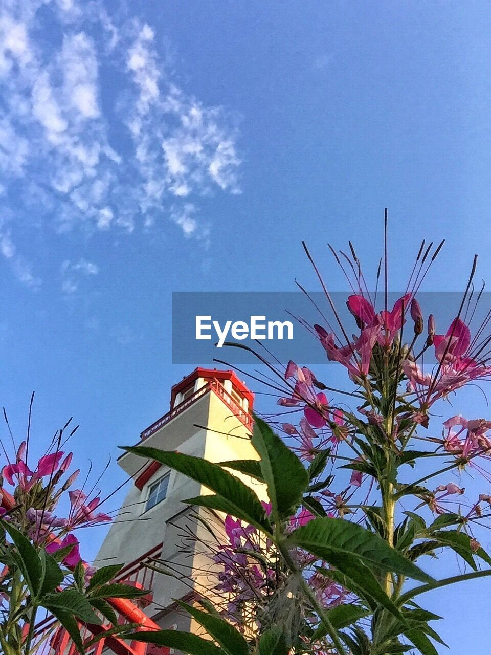 low angle view, growth, flower, plant, no people, blue, sky, day, nature, fragility, beauty in nature, architecture, built structure, outdoors, freshness, building exterior, leaf, multi colored, tree, blooming, close-up