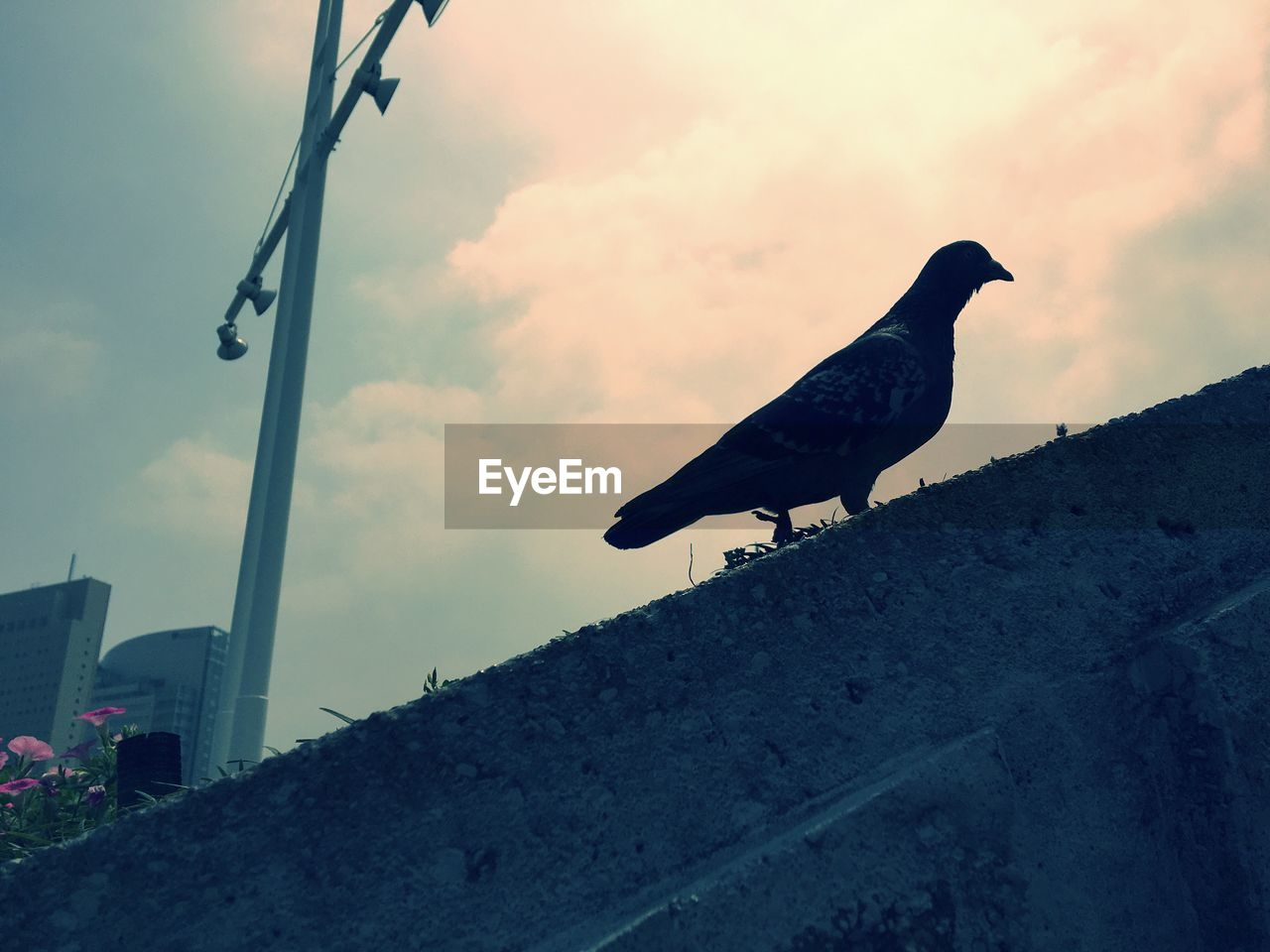 bird, animal themes, animals in the wild, low angle view, sky, outdoors, built structure, no people, animal wildlife, day, one animal, perching, nature, architecture, building exterior