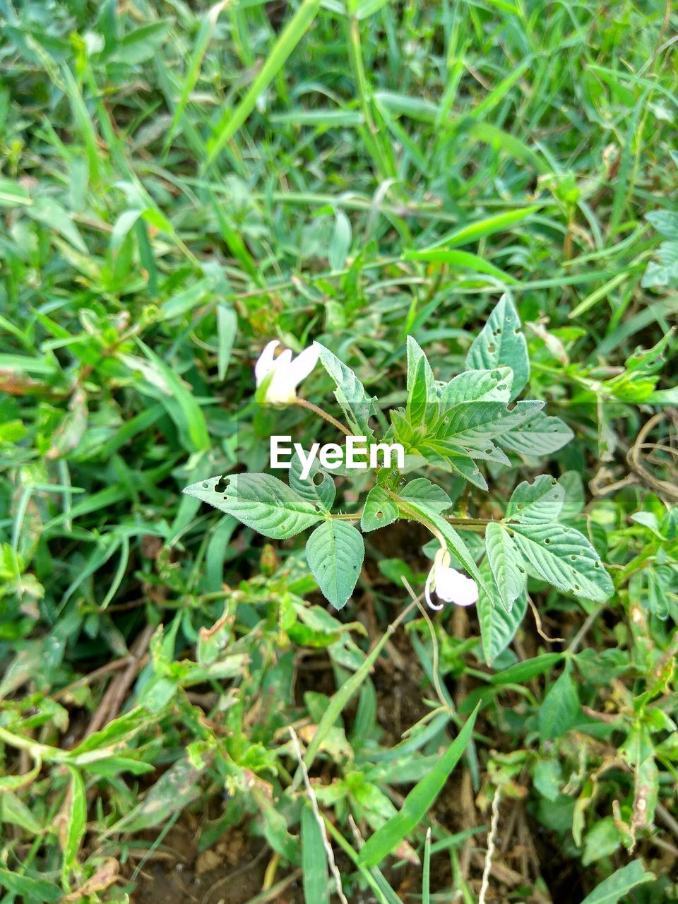 green color, growth, leaf, plant, nature, no people, outdoors, field, day, close-up, beauty in nature, freshness, fragility