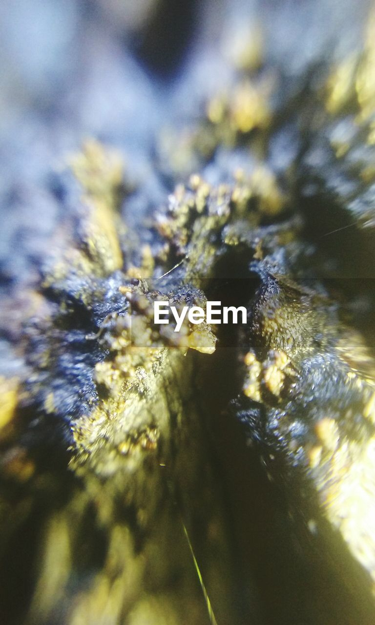 close-up, marijuana - herbal cannabis, no people, selective focus, day, outdoors, nature