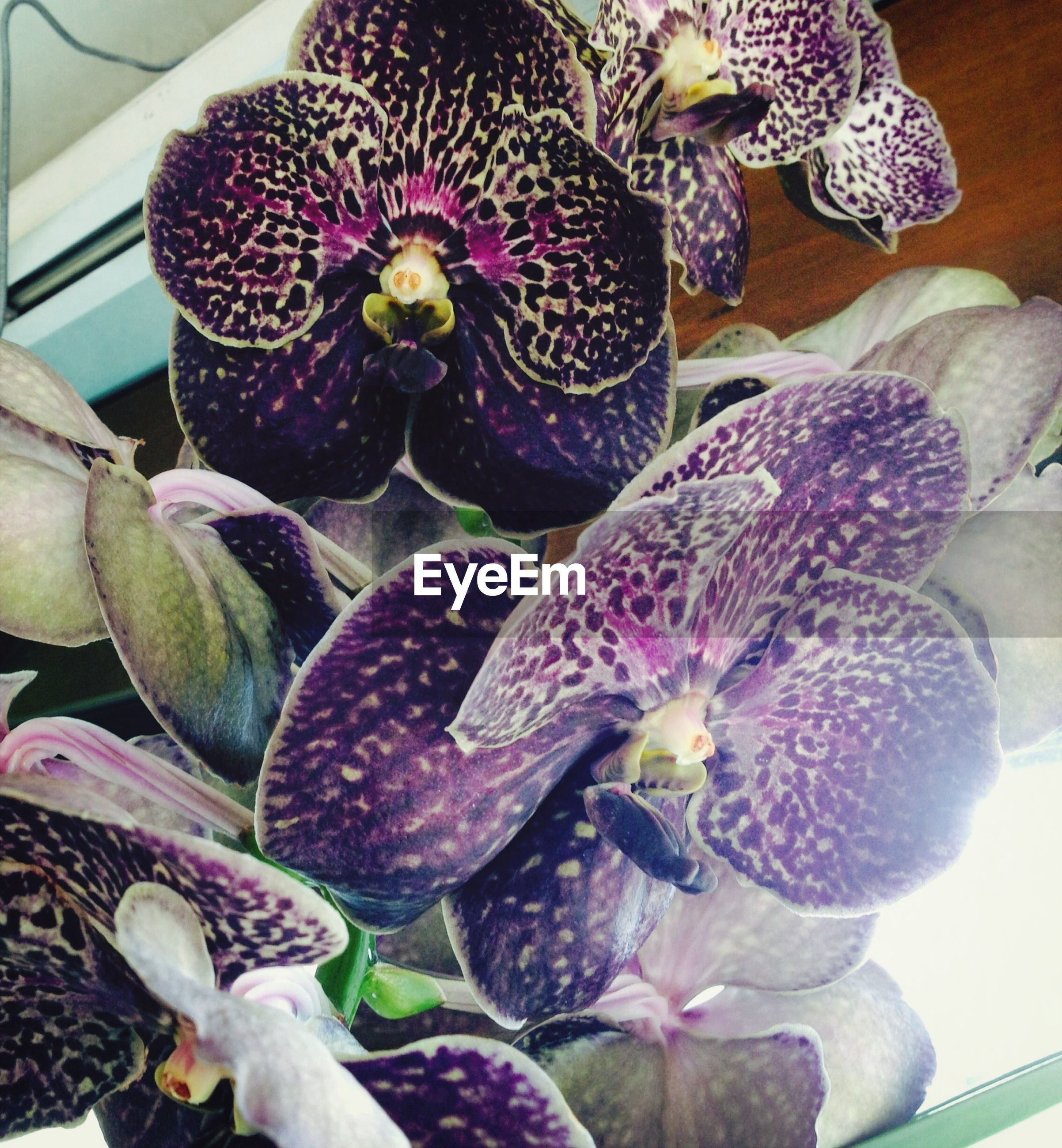 flower, petal, freshness, fragility, indoors, orchid, flower head, beauty in nature, plant, growth, nature, close-up, purple, high angle view, no people, blooming, day, leaf, natural pattern