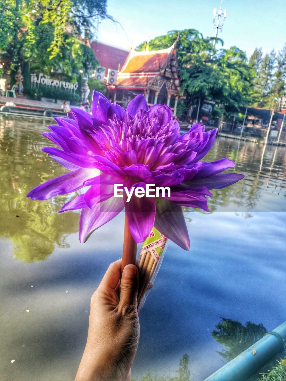 human hand, human body part, real people, holding, human finger, one person, flower, outdoors, pink color, petal, personal perspective, day, water, freshness, close-up, lifestyles, beauty in nature, fragility, nature, women, flower head, sky, people