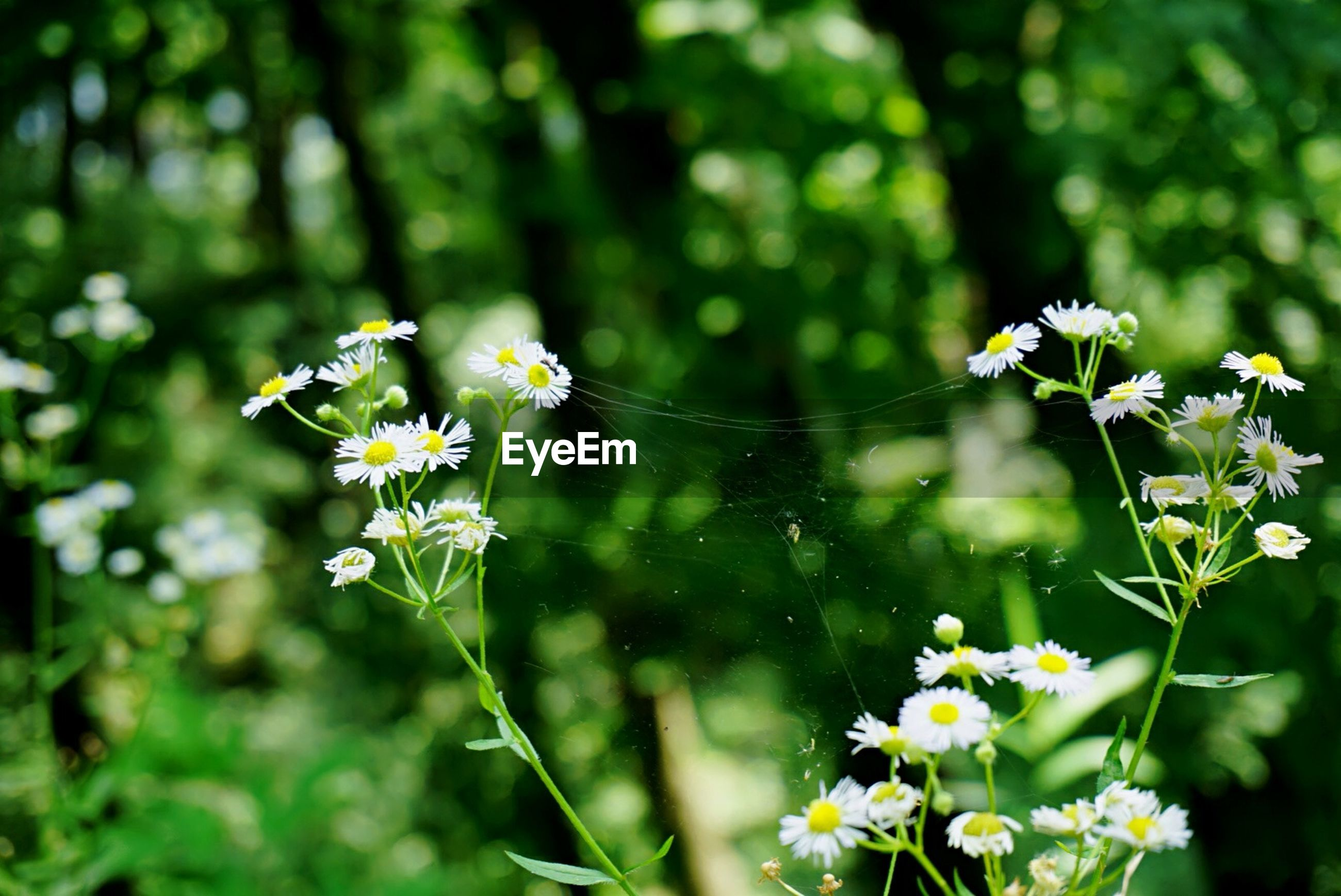 flower, fragility, freshness, growth, plant, animal themes, focus on foreground, white color, nature, wildlife, insect, one animal, beauty in nature, animals in the wild, stem, close-up, selective focus, petal, water, blooming