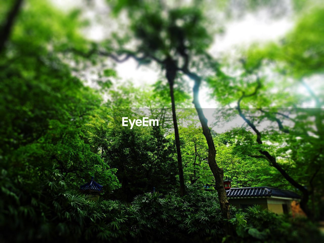 tree, green color, growth, nature, low angle view, forest, day, no people, built structure, outdoors, beauty in nature, branch, building exterior, architecture, sky
