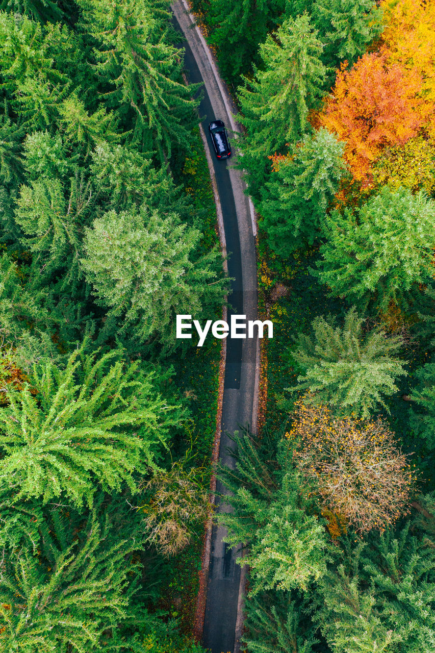 Topdown aerial photo of car on road winding through forest in colorful fall foliage, austria.