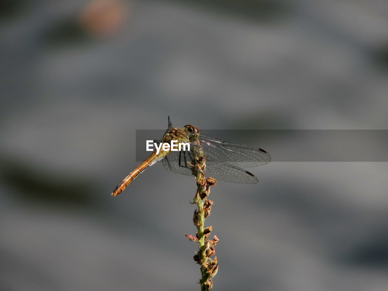 insect, animal themes, animals in the wild, one animal, focus on foreground, close-up, day, no people, animal wildlife, outdoors, nature, damselfly