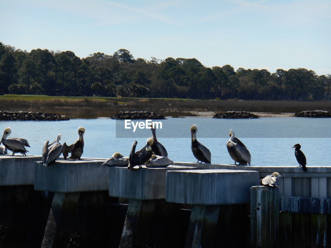 Pelicans And Cormorant Perching On Bridge Over River Against Sky