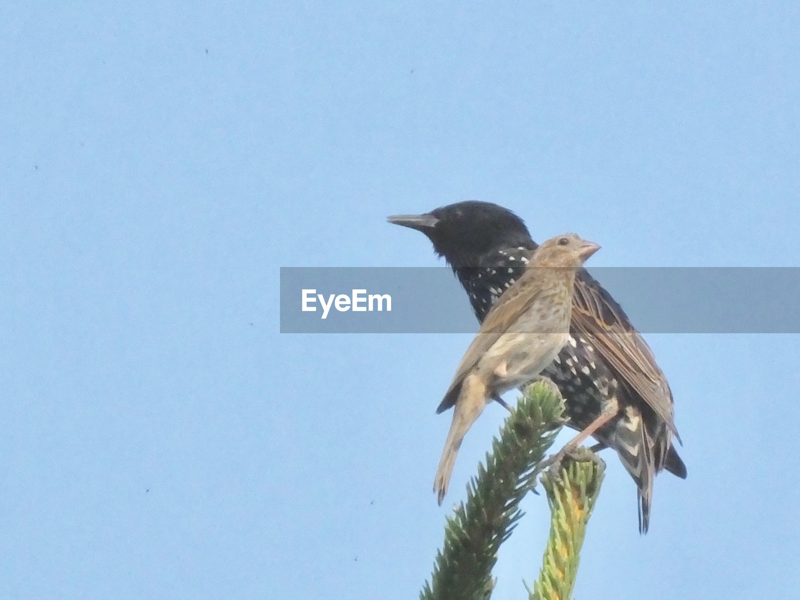 LOW ANGLE VIEW OF BIRD PERCHING ON A PLANT