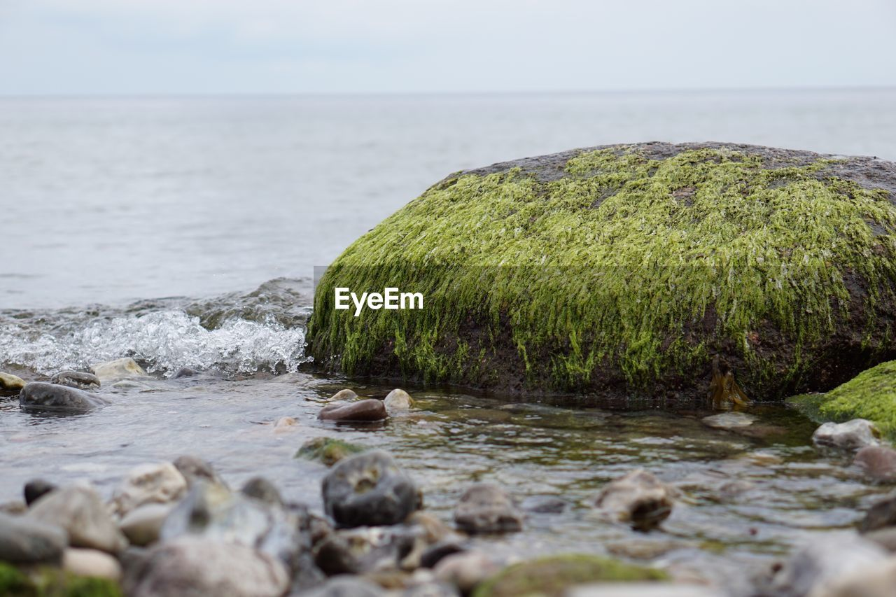 water, nature, sea, tranquil scene, rock - object, beauty in nature, tranquility, no people, scenics, outdoors, day, green color, moss, pebble, horizon over water, sky, grass, close-up