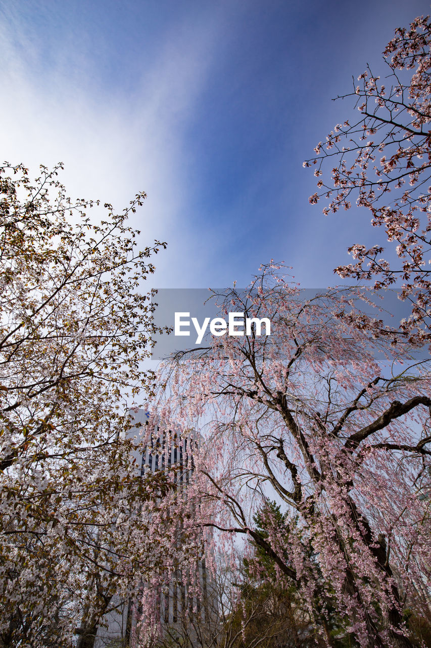 tree, low angle view, branch, beauty in nature, nature, growth, no people, flower, blossom, sky, day, fragility, outdoors, springtime, freshness, scenics, clear sky