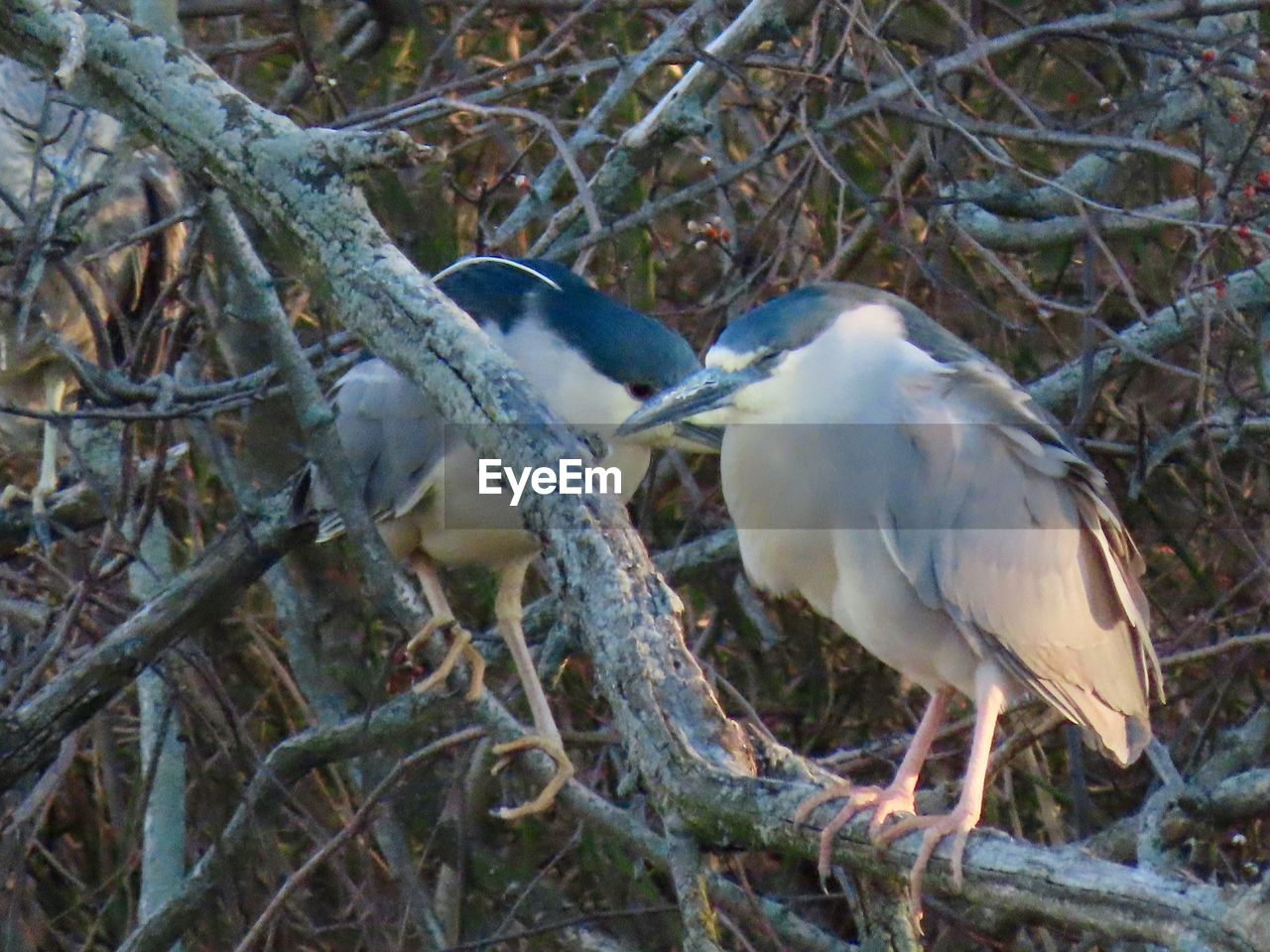 animal themes, animal, vertebrate, animal wildlife, bird, animals in the wild, tree, plant, branch, perching, no people, one animal, nature, day, white color, animal nest, focus on foreground, land