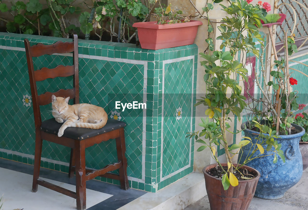 plant, potted plant, growth, animal themes, animal, nature, mammal, no people, pets, table, domestic, domestic animals, cat, one animal, vertebrate, flower pot, feline, day, domestic cat, outdoors, gardening