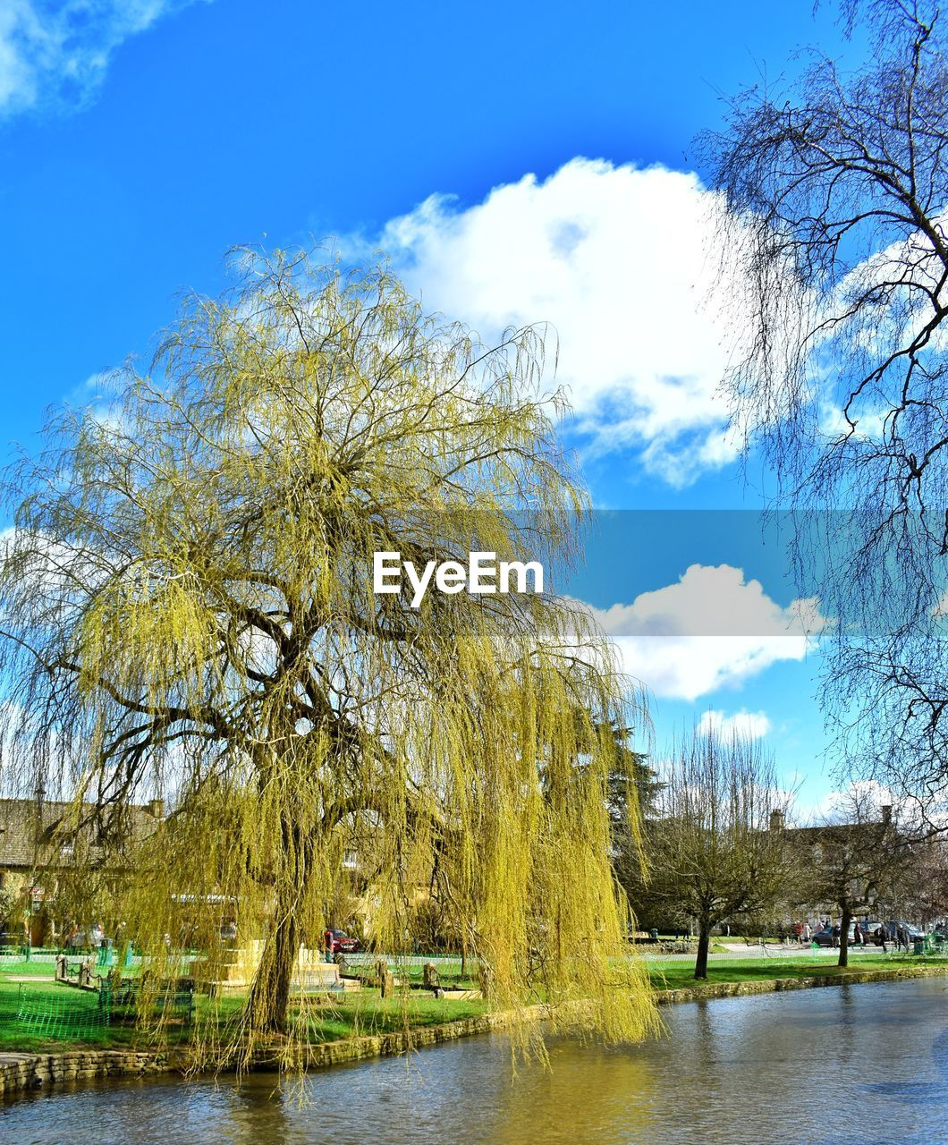 tree, water, plant, sky, cloud - sky, beauty in nature, nature, tranquility, tranquil scene, scenics - nature, no people, day, growth, lake, non-urban scene, waterfront, yellow, willow tree, outdoors