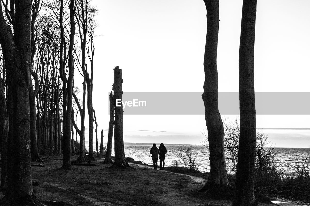 tree, tree trunk, sea, nature, horizon over water, water, real people, beauty in nature, silhouette, one person, scenics, tranquil scene, tranquility, full length, men, standing, sky, outdoors, clear sky, day, people