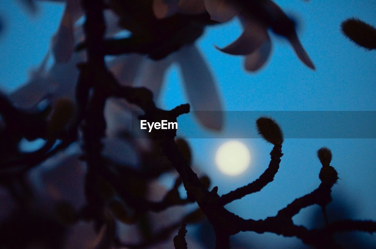 Silhouette of plant twigs with moon shining in sky