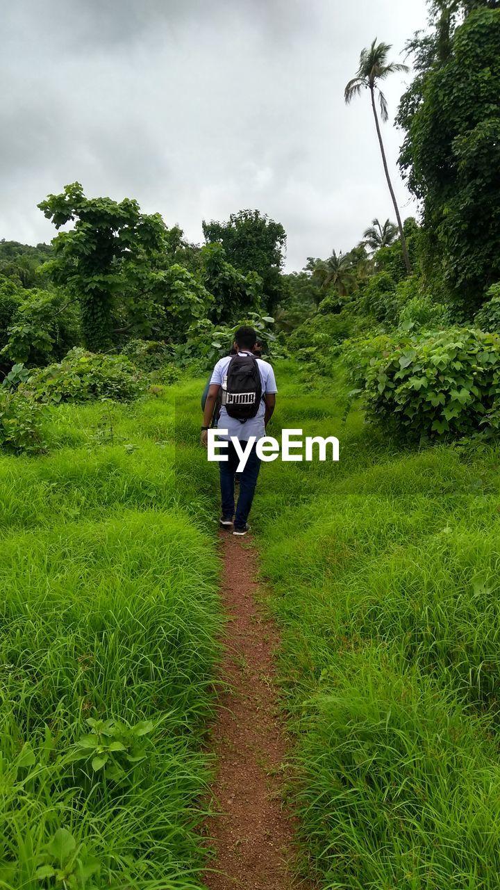 REAR VIEW OF MAN WALKING ON TRAIL AMIDST PLANTS ON FIELD
