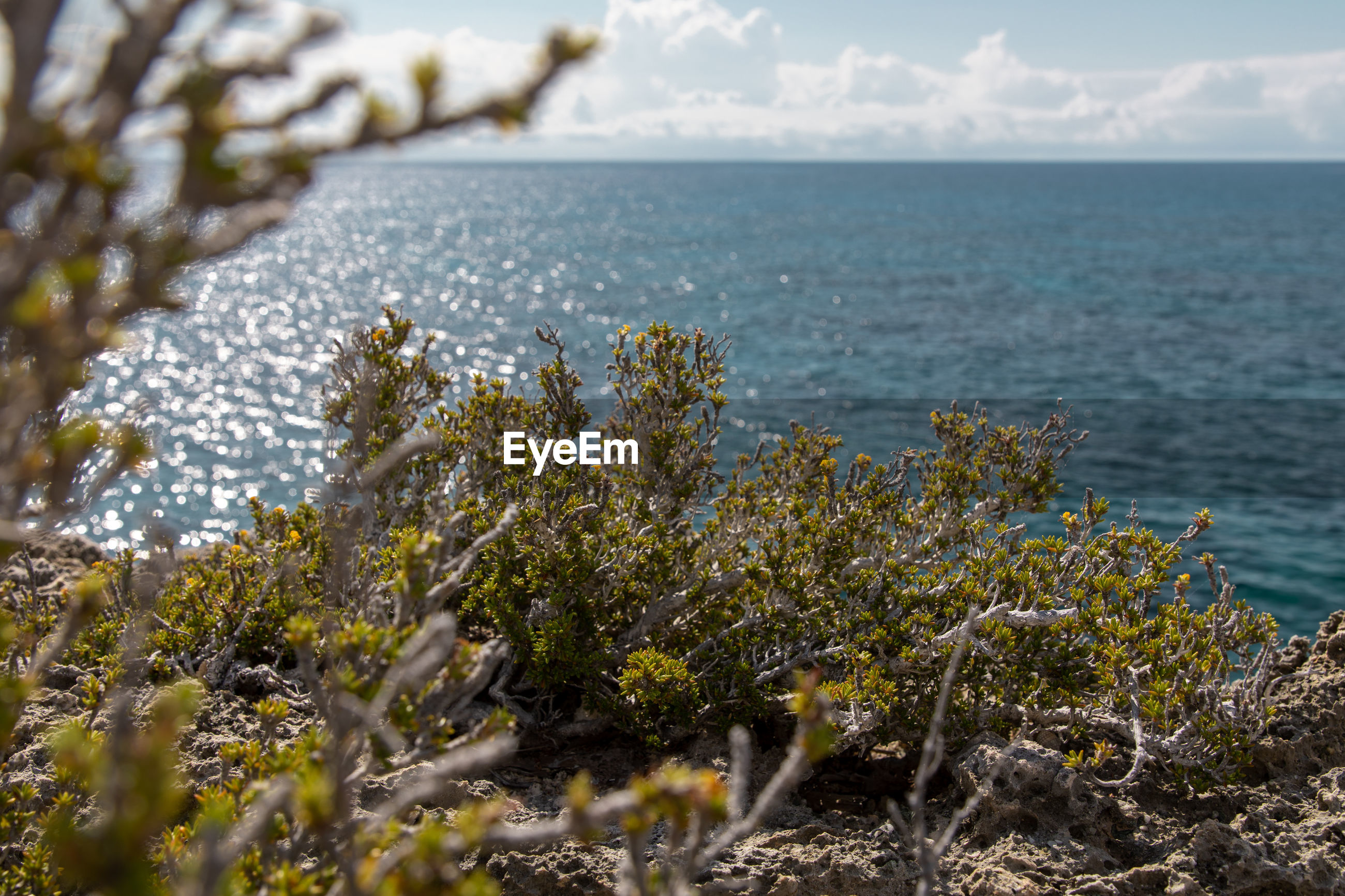 SCENIC VIEW OF SEA AND PLANTS AGAINST SKY