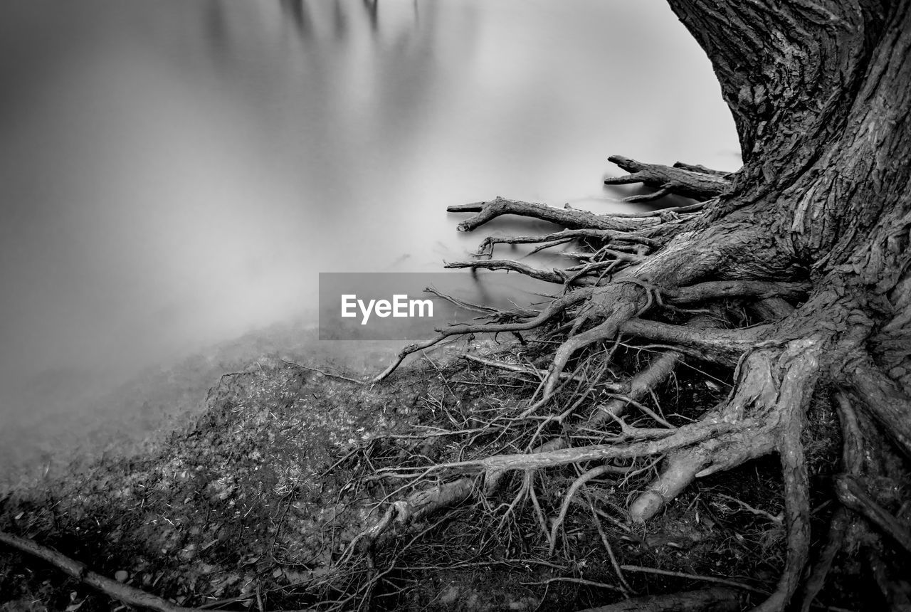 nature, lake, day, no people, water, outdoors, tree, tree trunk, one animal, animal themes, close-up, beauty in nature