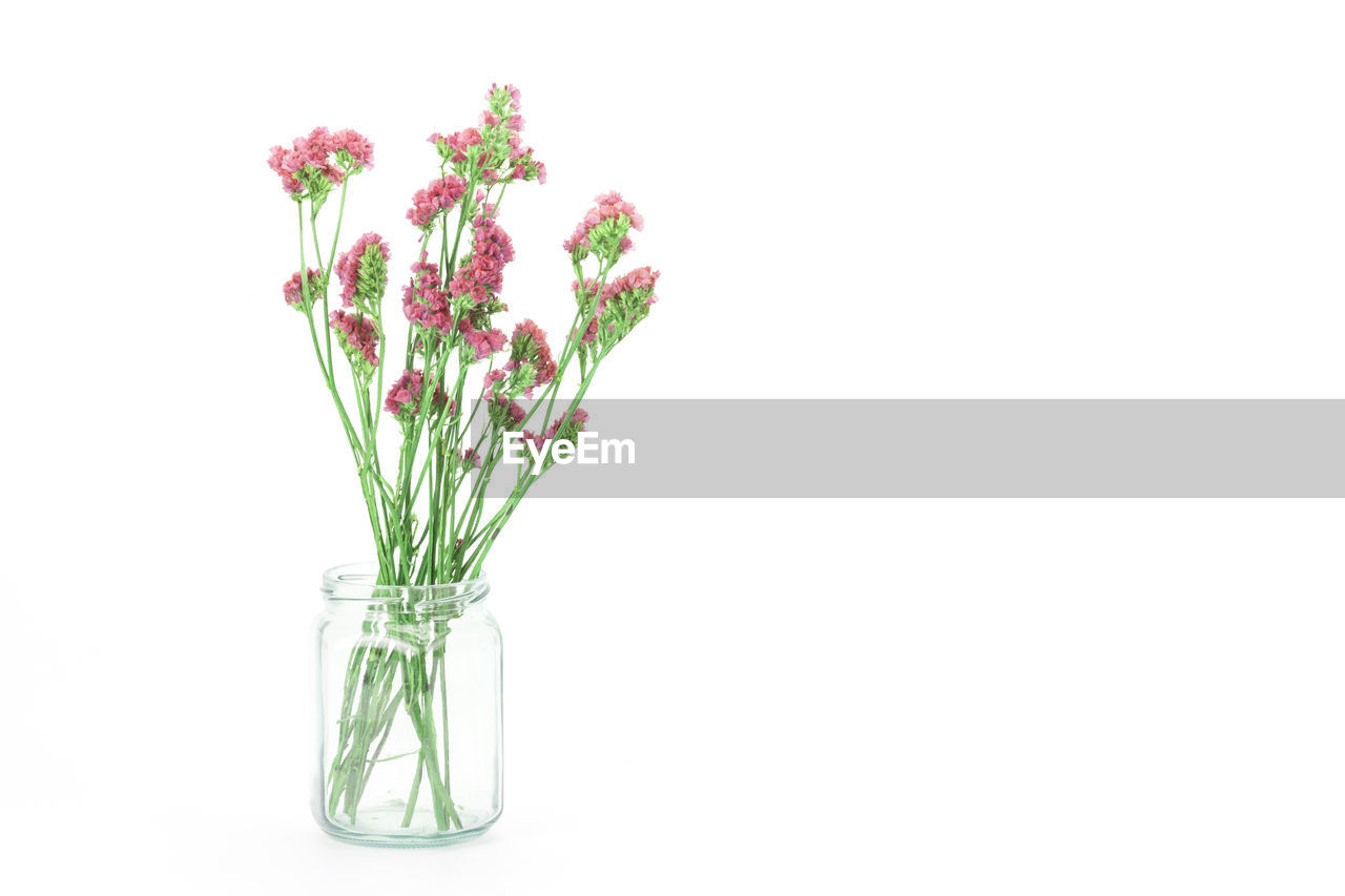 studio shot, plant, white background, flower, flowering plant, fragility, vulnerability, freshness, indoors, nature, copy space, beauty in nature, glass - material, no people, close-up, green color, cut out, vase, transparent, jar, flower head, purple, flower arrangement