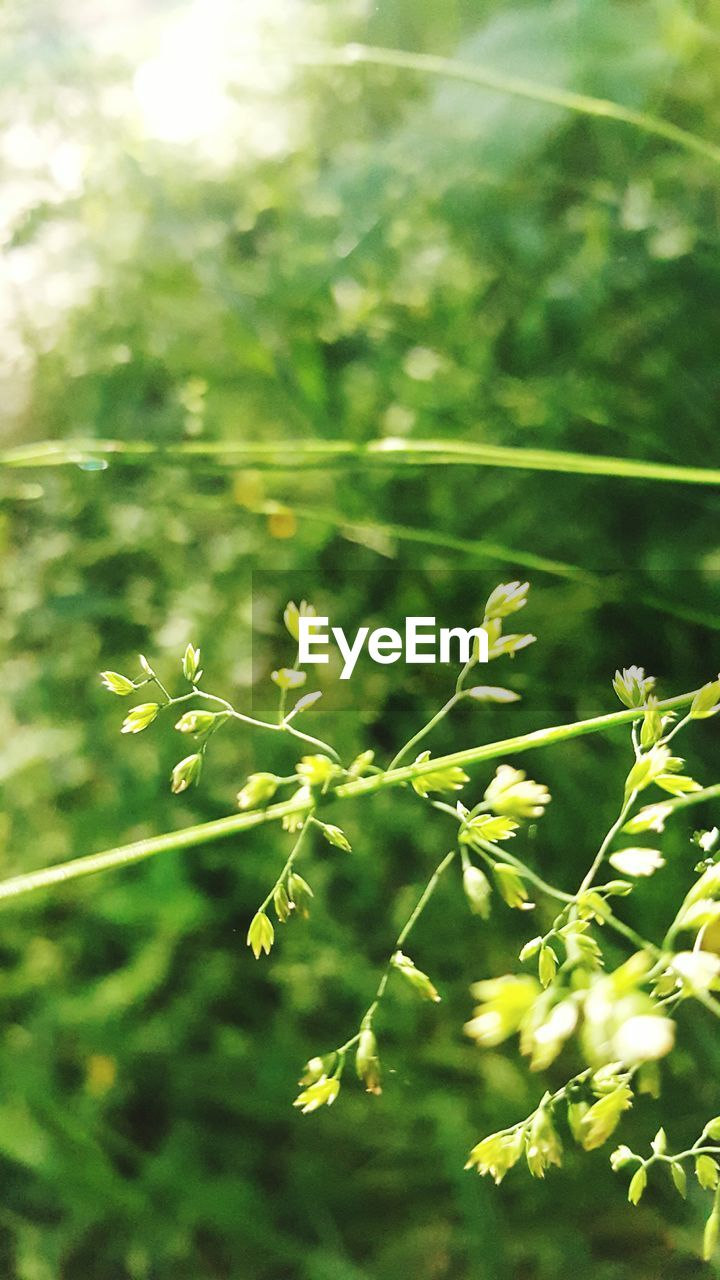 growth, photosynthesis, nature, plant, tissue, delicate, bright, relaxed moments, green, environment, no people, outdoors, day, beauty in nature, close-up, freshness