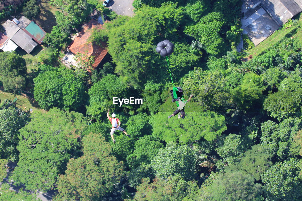 High Angle View Of Lush Foliage Against Trees