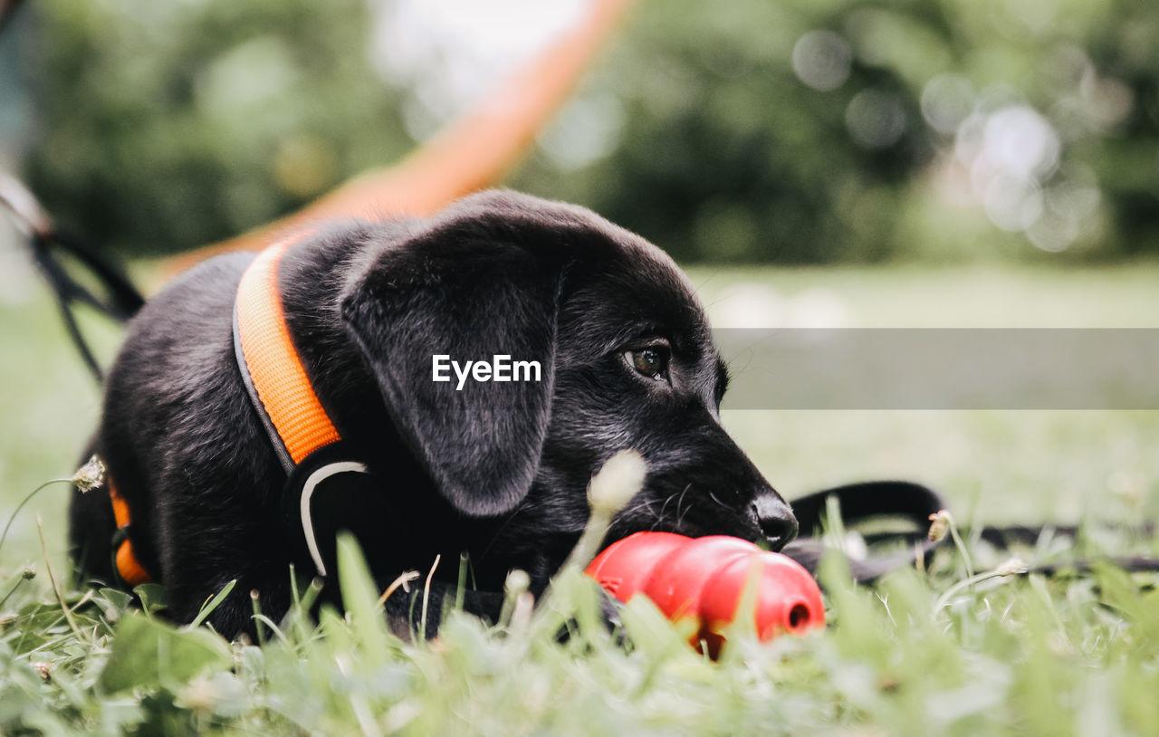 Close-up of black dog sitting on grassy field