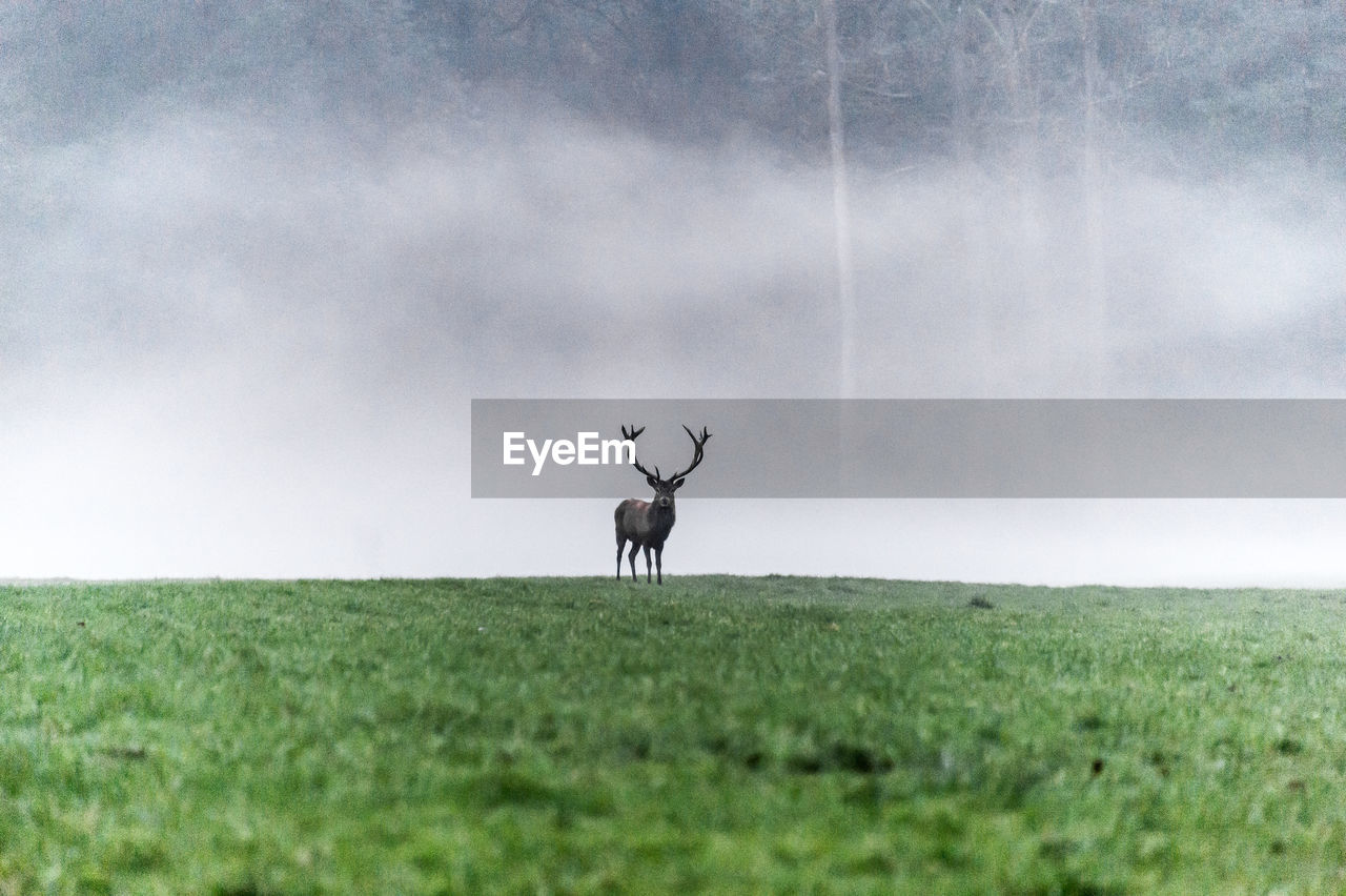 Deer on field against cloudy sky