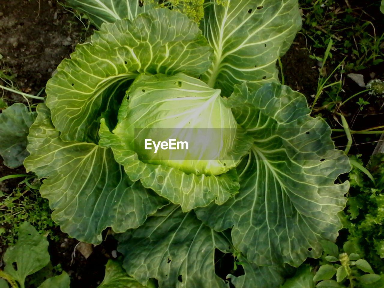 green color, growth, plant part, leaf, plant, beauty in nature, close-up, no people, freshness, nature, food, food and drink, healthy eating, vegetable, day, high angle view, outdoors, flower, water, land, marine