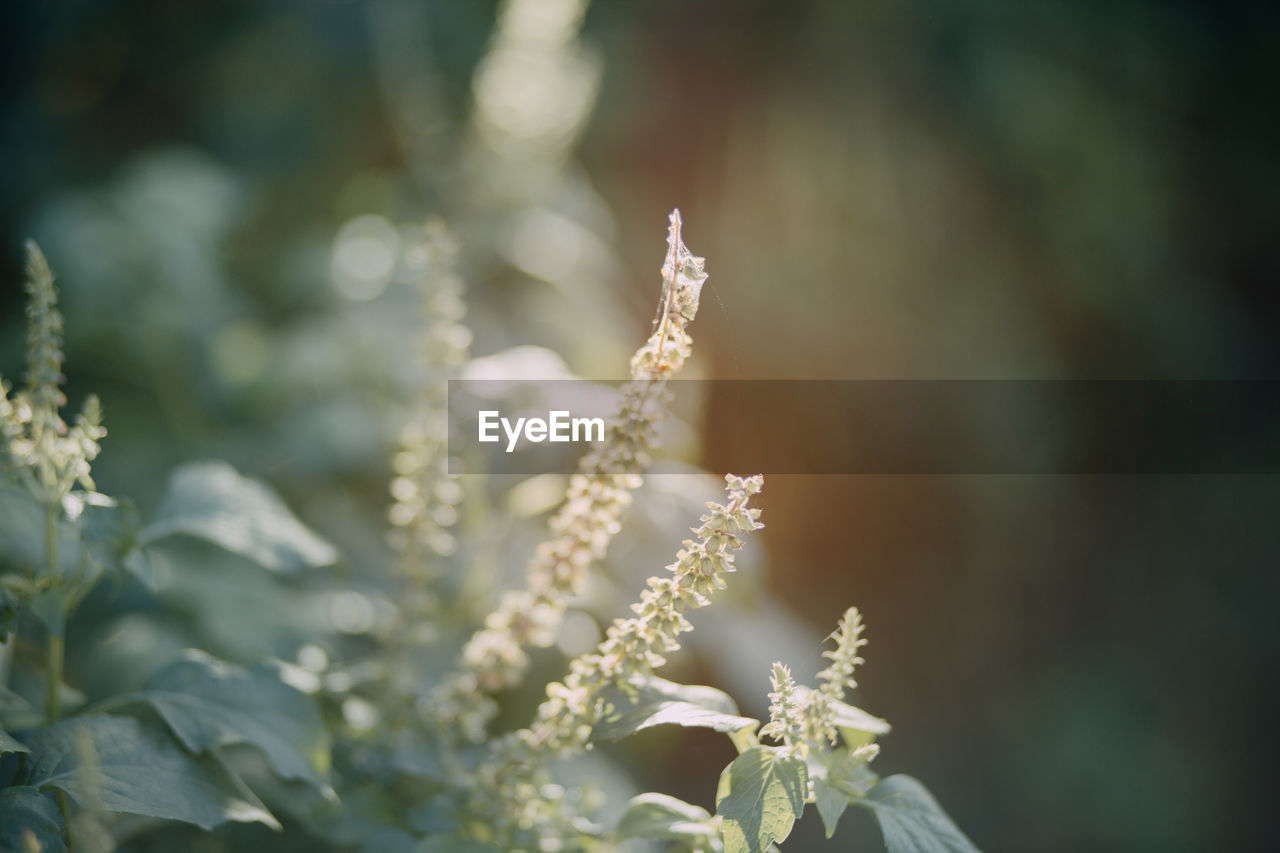 growth, beauty in nature, plant, no people, close-up, nature, day, selective focus, focus on foreground, tranquility, outdoors, flower, flowering plant, fragility, plant part, vulnerability, leaf, freshness, green color, cold temperature