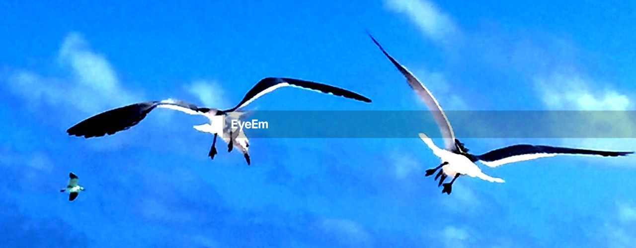 flying, spread wings, bird, animals in the wild, animal themes, animal wildlife, nature, mid-air, togetherness, motion, no people, outdoors, low angle view, sky, day, blue, beauty in nature, white stork