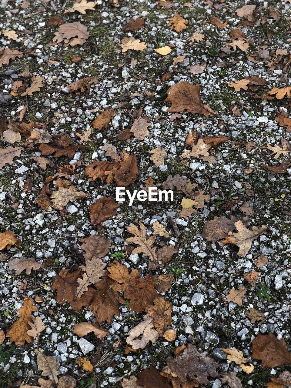 no people, day, full frame, nature, plant, growth, leaf, high angle view, plant part, close-up, directly above, field, lichen, beauty in nature, land, dry, brown, tree, fungus, outdoors, leaves
