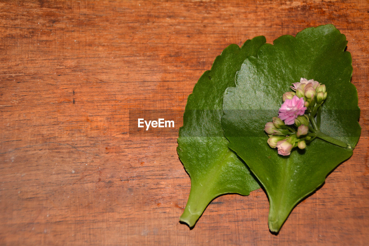 High angle view of pink flowers and buds on leaf at table