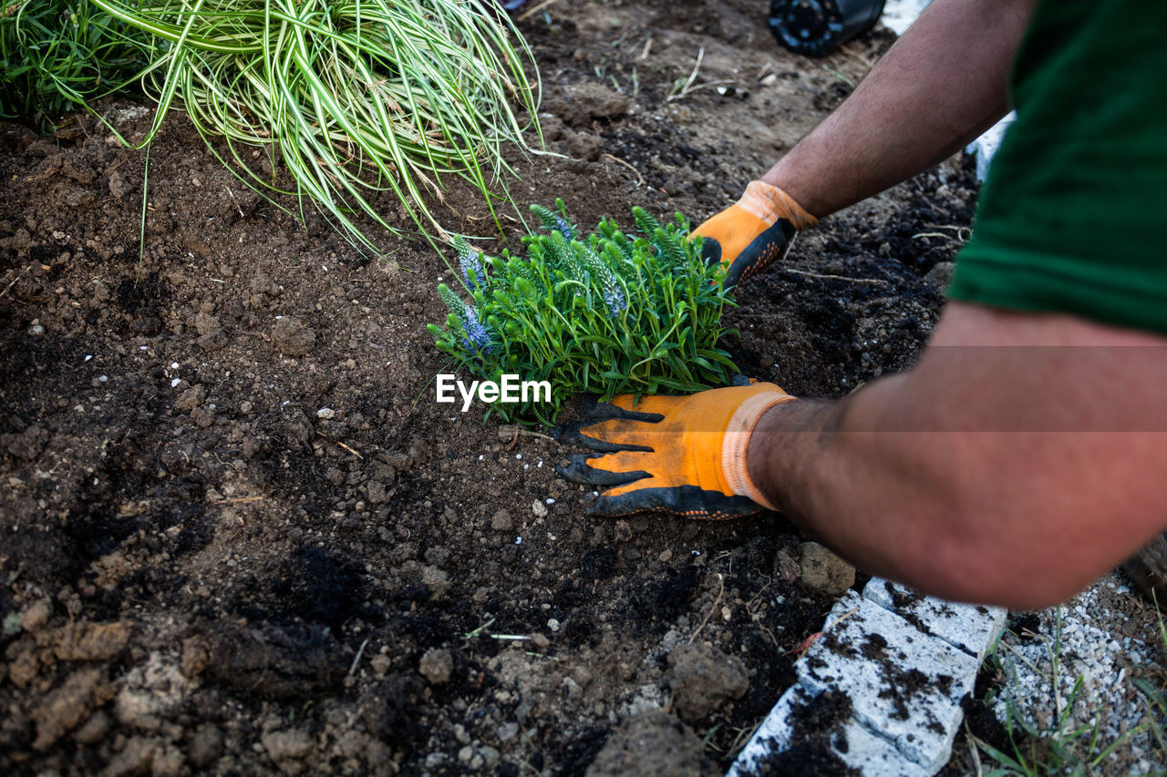 Cropped Hands Planting Crops At Vegetable Garden
