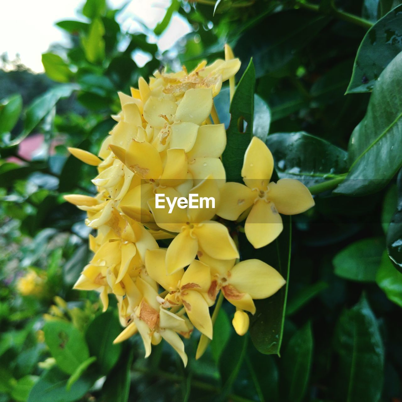 flowering plant, flower, plant, yellow, vulnerability, fragility, growth, beauty in nature, freshness, petal, flower head, inflorescence, close-up, day, nature, focus on foreground, outdoors, no people, plant part, leaf