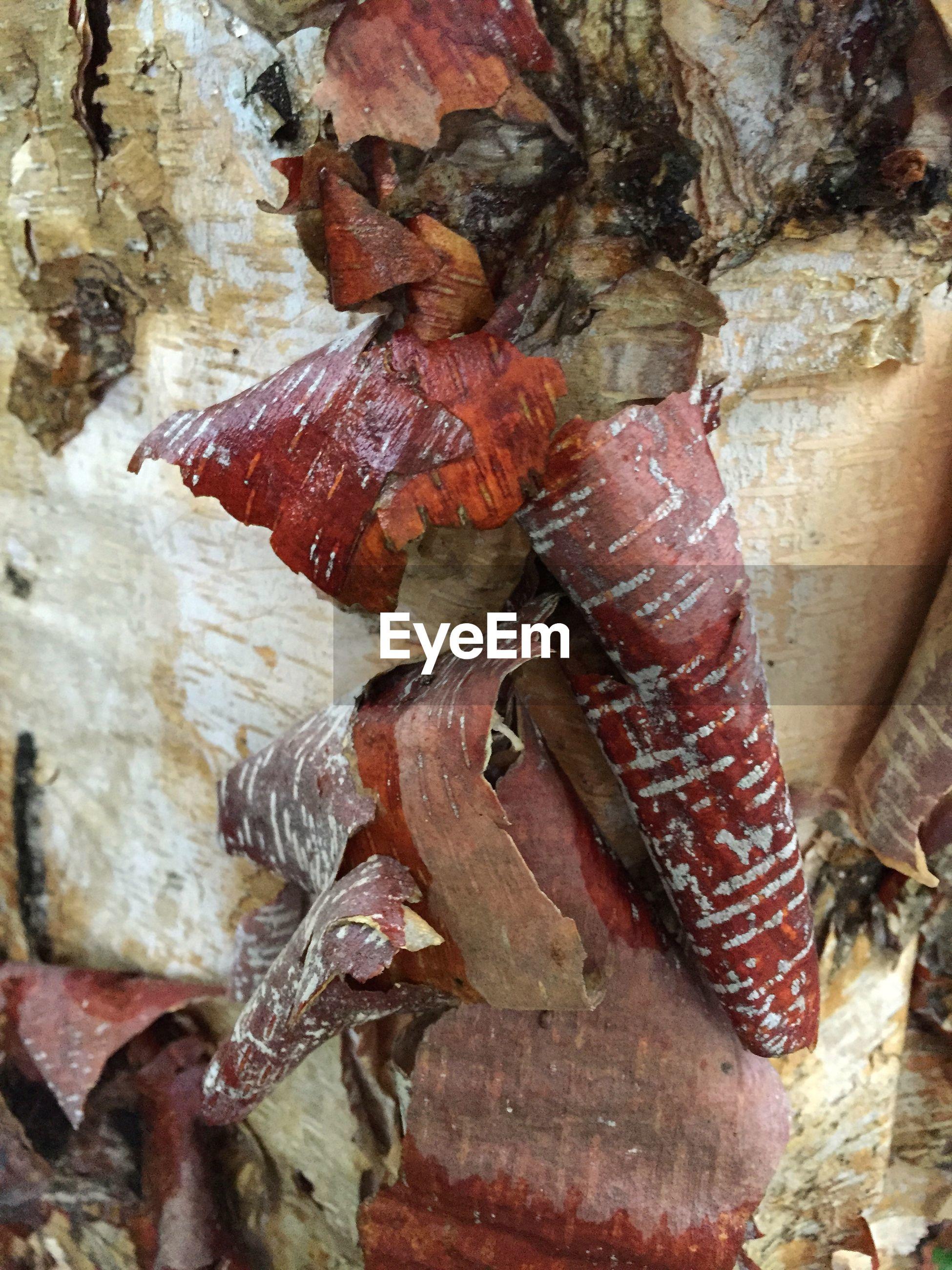 Close-up of weathered tree bark