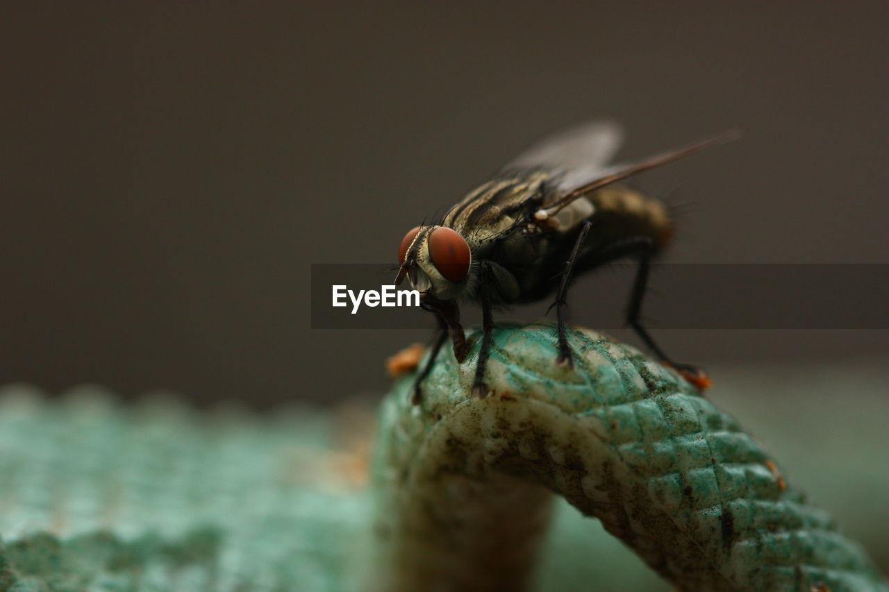Close-Up Of Housefly On Lizard Leg