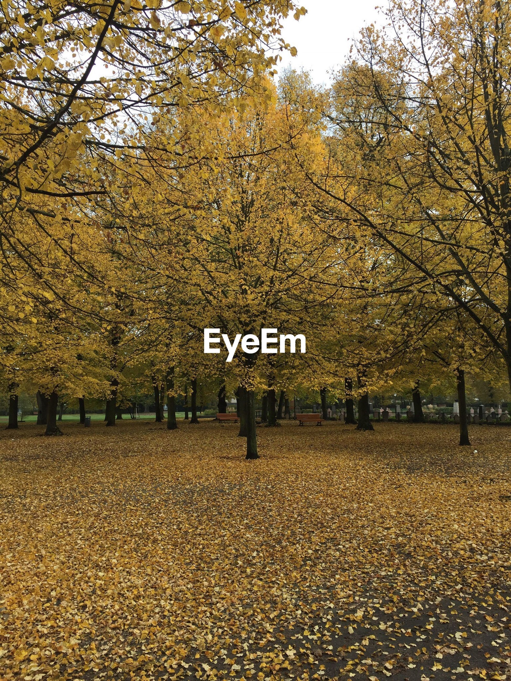 tree, autumn, season, change, yellow, tranquil scene, tranquility, branch, scenics, beauty in nature, tree trunk, nature, growth, non-urban scene, day, solitude, remote, park, abundance, vibrant color, no people, majestic, natural condition, tourism
