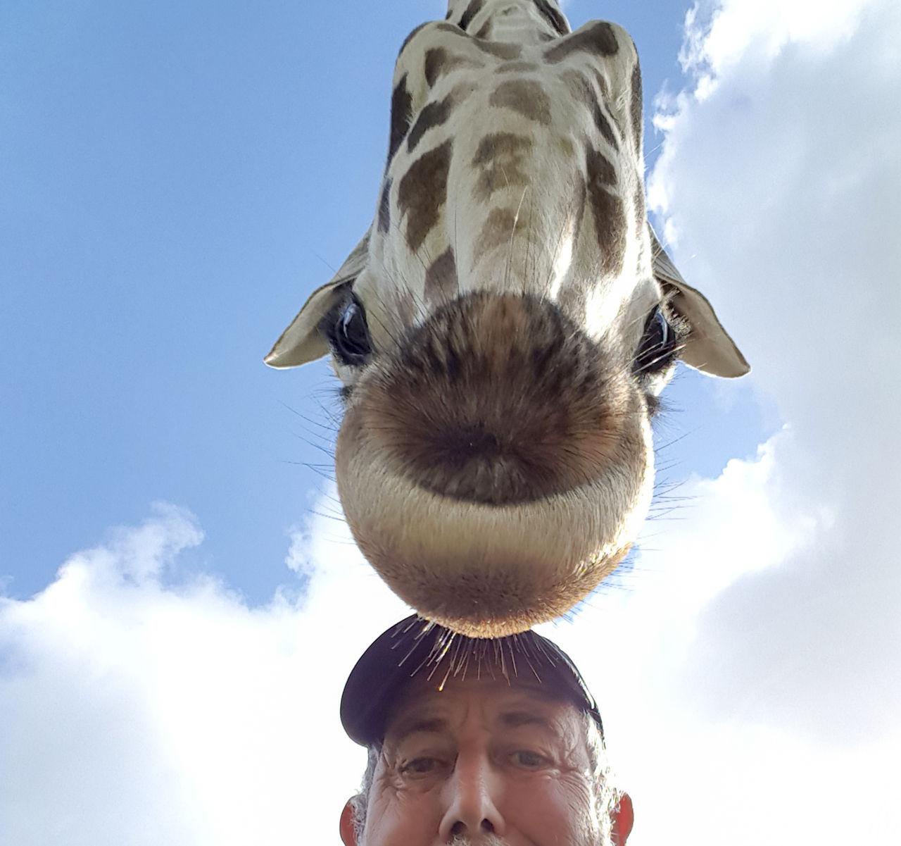 Portrait Of Man And Giraffe Against Sky