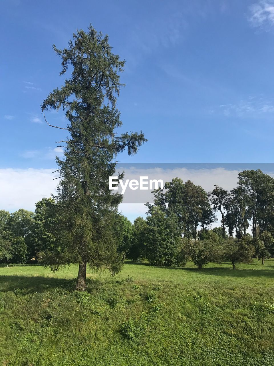 plant, tree, sky, grass, field, land, landscape, green color, environment, growth, tranquil scene, tranquility, nature, beauty in nature, day, scenics - nature, cloud - sky, no people, non-urban scene, outdoors