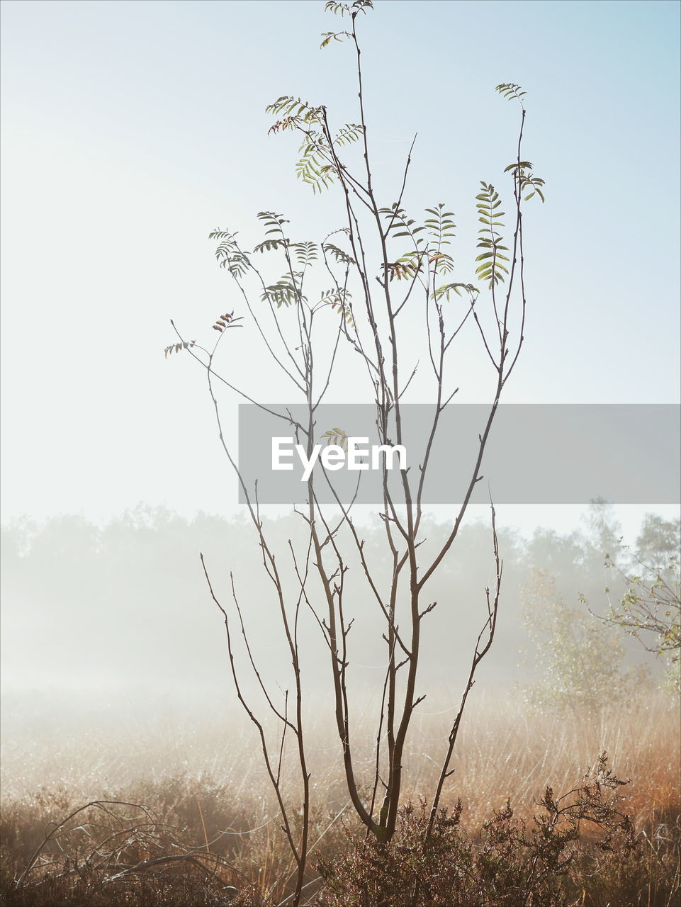PLANT ON FIELD AGAINST SKY