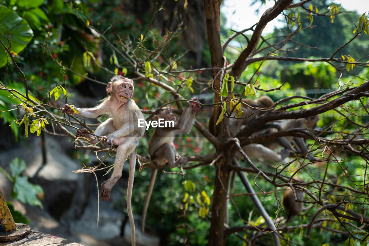 primate, monkey, animal, animals in the wild, animal themes, tree, plant, mammal, animal wildlife, vertebrate, branch, nature, one animal, day, no people, focus on foreground, sitting, forest, plant part, leaf, outdoors, animal family