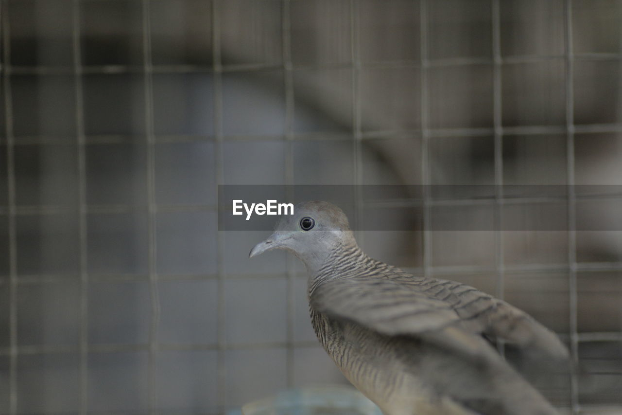 SIDE VIEW OF BIRD IN CAGE
